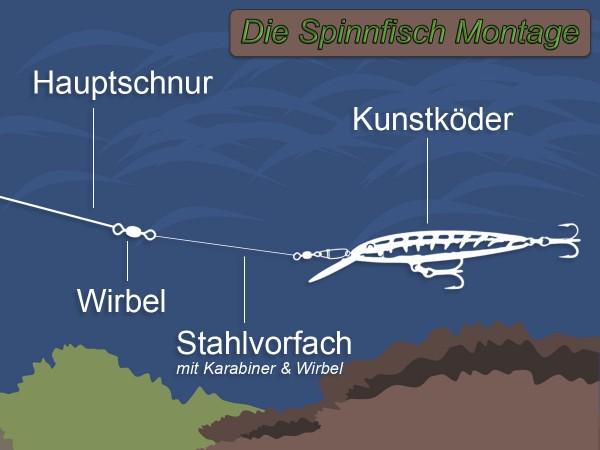 spinnfisch-montage